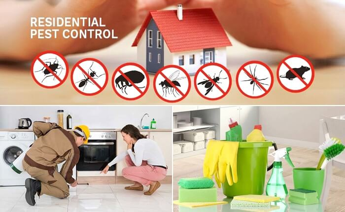 Pest control and cleaning services Dubai